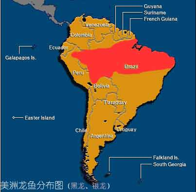 南美洲龙鱼