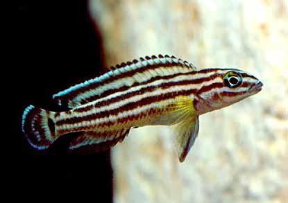 鱼病与水质管理