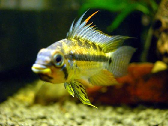 鱼病一般的检查方法