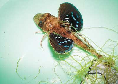 大连渔民捕获怪鱼 长了六条腿和蝴蝶翅膀