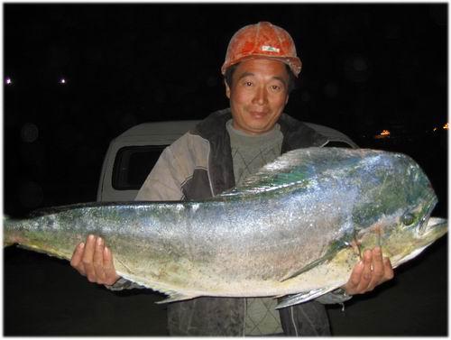"""""""无名大鱼""""原是热带鱼 主要生活在南太平洋一带"""