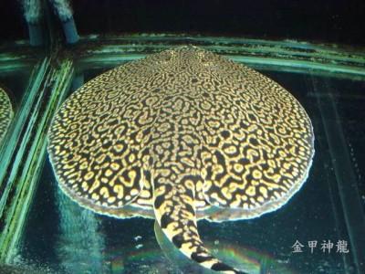 �鱼饲养心得基础篇正确应对�鱼的水质变化