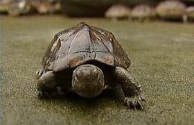 最新新闻:养殖黑龟鳖真就这么赚?(转)