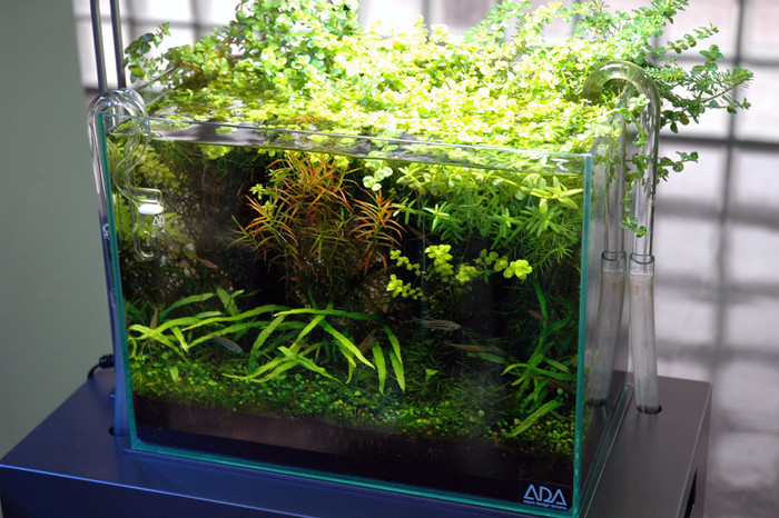水草鱼缸中的藻类预防及清除