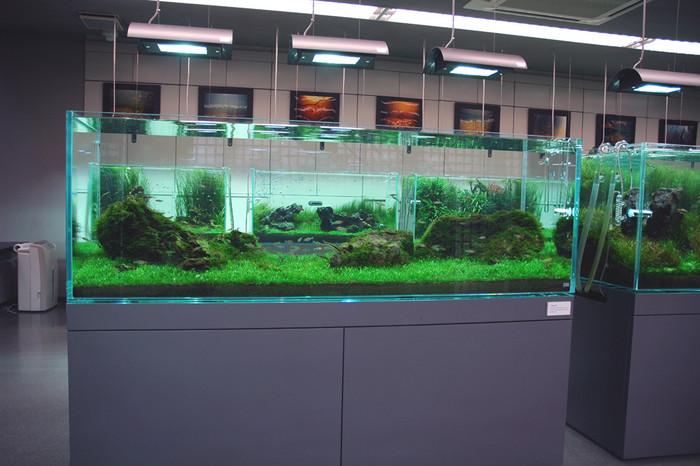 水质指标对观赏鱼的影响