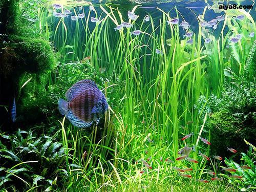 水草造景8大主流风格