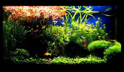 绿化你的鱼缸