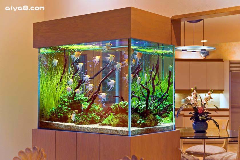 漂亮的鱼缸布景