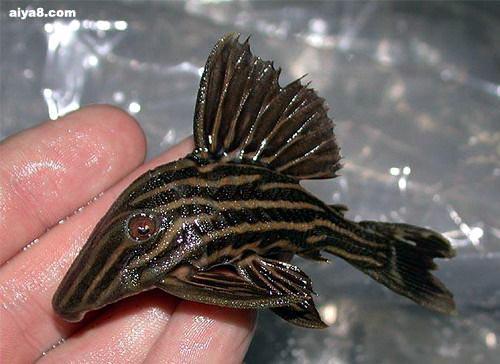 异型鱼(八)