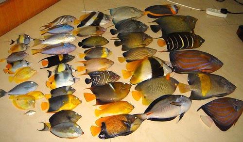 海水鱼惨案