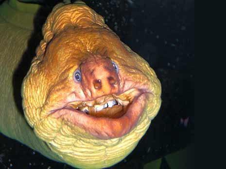 长相骇人的怪鱼