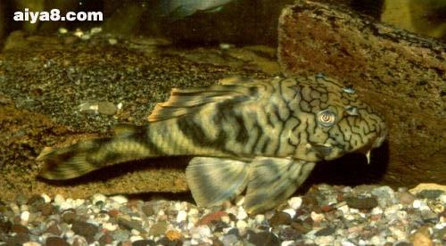 陶瓷娃娃异型鱼