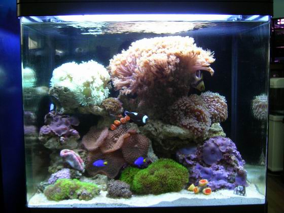 海水鱼缸的养护