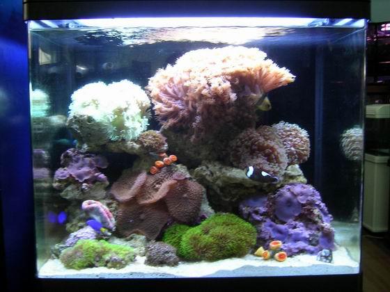 海水缸中的生物选择