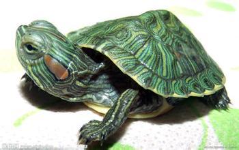 龟鳖养殖投资参考