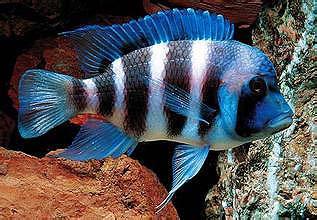 六间鱼图片