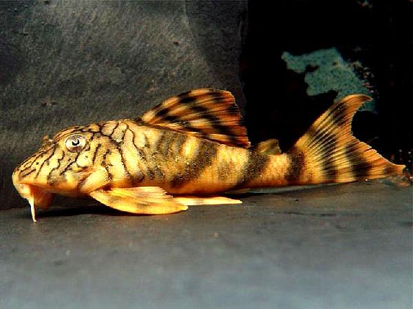陶瓷娃娃异型鱼L135