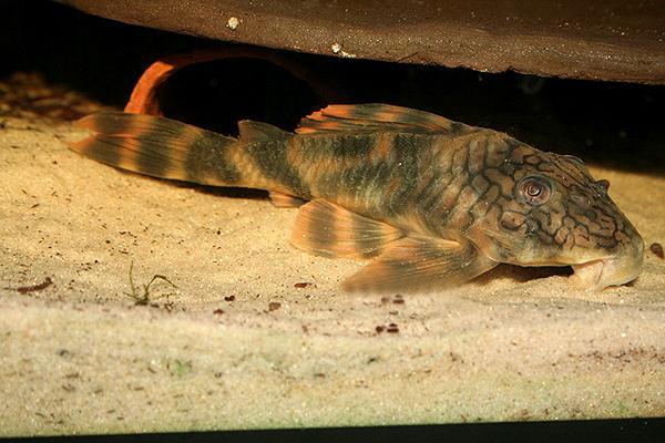 陶瓷娃娃异型鱼L121