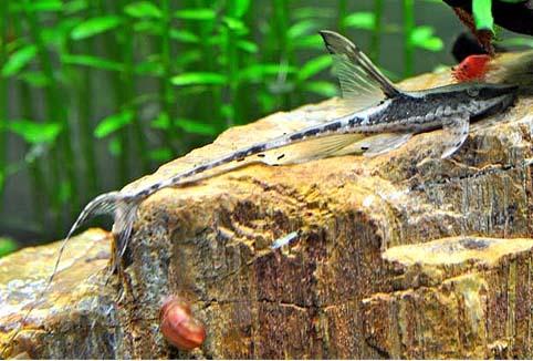 异型鱼图片