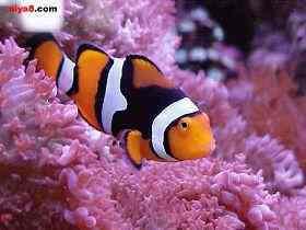热带鱼的饲养用水