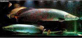 大型鱼极品混养爽图