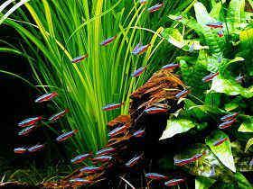 水草种植之前的修剪