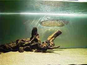 我喜欢的龙鱼造景