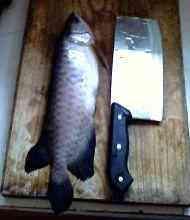 我家以前的鱼
