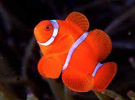 选购海水观赏鱼五注意