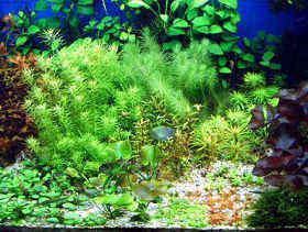 藻类的防治