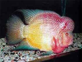 治疗鱼类肠炎病要慎选药物
