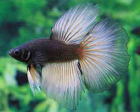 鱼体消毒常用的两种方法