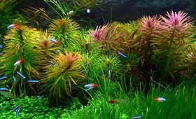 水草的生理性伤害及生物机械伤害