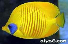 珊瑚鱼常见疾病