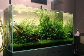 家庭水草造景缸