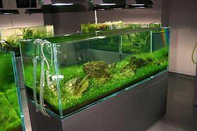 由甲壳动物引起的鱼病