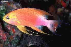 海水观赏鱼为什么生病