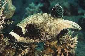 海水鱼白点病治疗