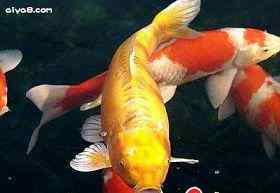 介绍养鱼常用药物
