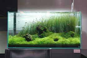 水族箱内栽种多少植物合适?