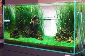 饲养热带鱼的用水