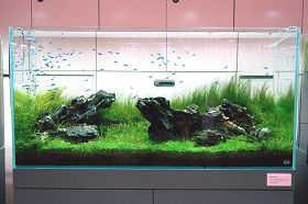 七彩神仙鱼最基本的水质控制