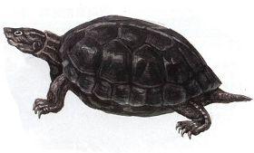 乌龟的别称