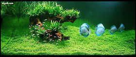 水草缸设置步骤