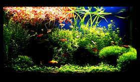 鱼缸生态平衡与水草景观