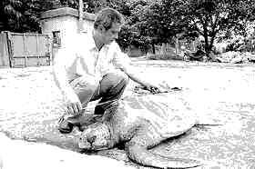 珍惜的红海龟你见过吗