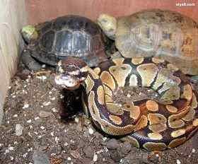 乌龟和老蛇住在一起