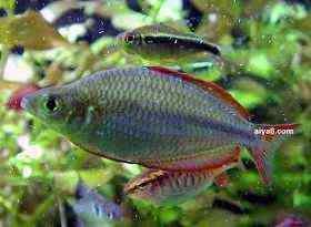 小型鱼闪电彩虹