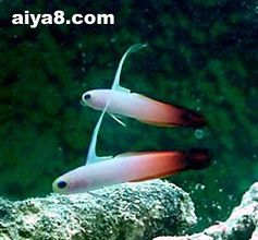 海水鱼-雷达