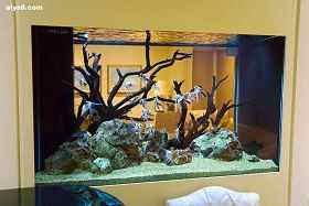 鱼缸在家居中的摆设(二)